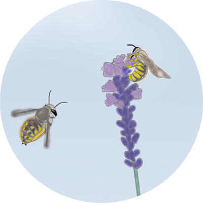 Was machen Bienen eigentlich im Winter?